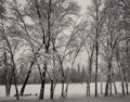 Photographs, Ansel Adams (American, 1902-1984). Young Oaks, Winter, Yosemite National Park, California, 1938. Gelatin silver, printed...
