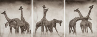 Nick Brandt (English, b. 1964) Giraffe Triptych, Maasai Mara (3 works), 2005 Pigment print Each ... (Total: 3)