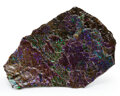 Fossils:Cepholopoda, Ammolite Fossil. Placenticeras sp.. Cretaceous. Bearpaw Formation. Southern Alberta, Canada. 6.89 x 4.53 x...