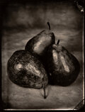 Photographs, Tom Baril (American, b. 1952). Group of Four Botanical Photographs, circa 2000. Toned gelatin silver. 16-7/8 x 13-1/4 in... (Total: 4 )