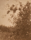 Photographs, William Jefferson Carpenter (Canadian, 1861-1925). Group of 6 Views of an Orchard and Vineyard, circa 1910. Toned gelati... (Total: 6 )
