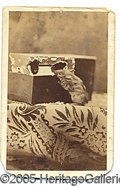 Photography:CDVs, RARE MOUSE NIBBLING A BOX CDV. RARE CDV OF A MOUSE NIBBLING HIS ...