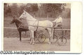 Photography:Cabinet Photos, CABINET CARD OF OVER-SIZED HORSE. CABINET CARD OF THE LARGEST PA...