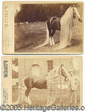 Photography:Cabinet Photos, CABINET CARDS PICTURING THE FAMOUS SHOW HORSE, LINUS. PAIR OF CA...