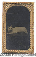 Photography:Tintypes, UNUSUAL SMALL SIZED TINTYPE OF A WHITE CAT. EIGHTH PLATE/ SMALL ...