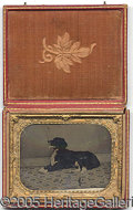 Photography:Tintypes, UNUSUAL QUARTER PLATE TINTYPE OF DOG. QUARTER PLATE TINTYP...