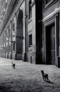 Photographs, Leonard Freed (American, 1929-2006). Cats in Naples, Italy, 1956. Digital pigment, printed later by Highland Studio, Col...