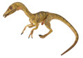 """Movie/TV Memorabilia, Compsognathus """"Compy"""" screen-used dummy puppet from The Lost World: Jurassic Park...."""