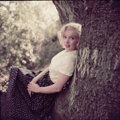 """Movie/TV Memorabilia, Color camera transparency of Marilyn Monroe from """"Tree"""" sitting by Milton Greene. ..."""