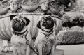 Photographs, Stan Askew (American, 1945). Group of 6 Dog Photographs, 2001-2003. Gelatin silver. 9-1/2 x 6-1/4 inches (24.1 x 15.9 cm... (Total: 6 )