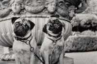 Stan Askew (American, 1945) Group of 6 Dog Photographs, 2001-2003 Gelatin silver 9-1/2 x 6-1/4 inches (24.1 x 15.9 cm...