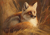 Greg Beecham (American, b. 1954) Study of a Fox Oil on canvas laid on panel 5 x 7 inches (12.7 x