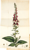 Books:Medicine, William Withering. An Account of the Foxglove. And some of its medicinal uses... Birmingham: Printed by M. Swinn...