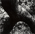 Photographs, Aaron Siskind (American, 1903-1991). The Tree, 108, 1972. Gelatin silver. 9-1/2 x 9-5/8 inches (24.1 x 24.4 cm). Signed,...