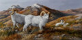 Paintings, Trevor Swanson (American, b. 1968). White Big Horn Sheep. Oil on canvas. 12 x 24 inches (30.5 x 61.0 cm). Signed lower r...