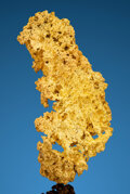 Minerals:Golds, Crystallized Gold. Irish Hill Mining District. Amador Co.. California, USA. ...