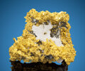 Minerals:Golds, Gold in Quartz with Arsenopyrite. 16 to 1 Mine (Sixteen-to-One Mine; Original Sixteen-to-One Mine). Alleghany, Allegha... (Total: 2 Items)