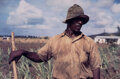 Photographs, Jack Delano (American, 1914-1997). Farm Security Administration Borrower, Frederiksted, St. Croix, Virgin Islands, 1941...