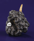 Minerals:Cabinet Specimens, DEEP-SEA MANGANESE NODULE WITH FISH TOOTH. ...