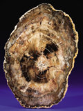 Minerals:Cabinet Specimens, PETRIFIED WOOD SLAB. ...