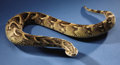 Zoology:Taxidermy, AFRICAN PUFF ADDER. ...