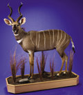 Zoology:Taxidermy, LESSER KUDU FULL-BODY MOUNT. ...