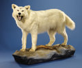 Zoology:Taxidermy, ARCTIC WOLF FULL-BODY MOUNT. ...