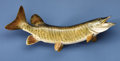 Zoology:Taxidermy, TIGER MUSKIE . ...