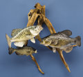 Zoology:Taxidermy, THREE CRAPPIEE FISH MOUNTS. ... (Total: 3 Items)