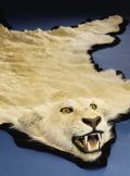 Zoology:Taxidermy, RARE ALBINO AFRICAN LIONSKIN RUG. ...