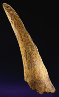 Dinosauria:Cretaceous, TRICERATOPS HORN. ...