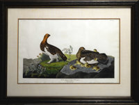 A Hand-Colored Engraving, Willow Grous  John James Audubon England, 1834 Hand colored engraving on laid paper Marks