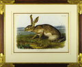 Prints:American, A Hand-Colored Lithograph, Texan Hare. J.W. Audubon.Philadelphia, 1848. Lithograph, coloured and printed by J.T.Bowe...