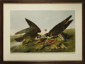 Antiques:Posters & Prints, John James Audubon (1785-1851). Great Footed Hawk. Falco Peregrinus. Gmel. Male 1., Female 2. Green-Winged, Teal and Gadwal....