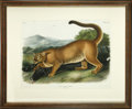 Antiques:Posters & Prints, John James Audubon (1785-1851). Felis Concolor, Linn. The Cougar. Male. [Pl. XCVI]....