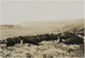 Western Expansion:Cowboy, Framed Photograph of Buffalo and Cowboy on the Range early 1900s -...