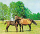 PROPERTY FROM A DISTINGUISHED COLLECTION  MALCOLM MORLEY (British, b. 1931) Horses, 1967 Oil on canvas 30 x 40 inch