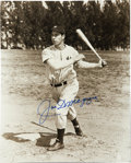 Autographs:Photos, Joe DiMaggio Signed Black and White Photograph. The Yankee Clipperhas applied a stunning blue sharpie signature to this fa...