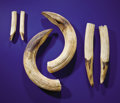 Zoology:Osteology, SET OF SIX TEETH (THREE PAIRS) FROM AN EXTREMELY LARGEHIPPOPOTAMUS. ... (Total: 6 Items)