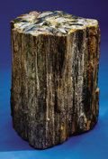 Fossils:Paleobotany (Plants), PETRIFIED WOOD LOG SECTION - DECORATIVE FOSSILIZED SECTION OF A PINE TREE. ...