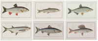 MARCUS ELIESER BLOCH (French, 1723-1799)  Six hand-colored engravings 8 x 14 inches (20.3 x 35.6 cm) each