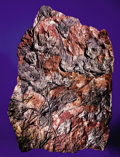 Fossils:Echinoderms, LARGE CRINOID PLAQUE. ...