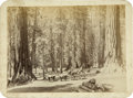 Photography:Cabinet Photos, Photograph Yosemite, California Stagecoach/Mud Wagon ca 1880s....