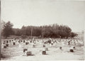 Photography:Cabinet Photos, Imperial Size Photograph of Bee Hives in Orchard ca 1900 - ...