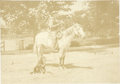 Photography:Cabinet Photos, Cabinet Card Photograph of Cowboy on Horse ca 1880s-1890s - ...