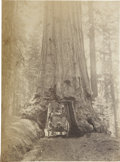 Photography:Cabinet Photos, Wagon Driving through Tree, Yosemite [?], Cabinet Card,...