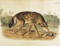 "Miscellaneous, John James Audubon. ""Canis Lupus, Linn Var Rufus. Red TexanWolf. Male"" [Plate LXXXII from The Viviparous Quadrupeds of ..."