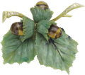 Estate Jewelry:Brooches - Pins, Nephrite, Tiger's-Eye, Diamond, Gold Clip-Brooch, Austrian . ...