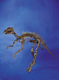 "AN EXTREMELY RARE JUVENILE ""DUCK-BILLED"" DINOSAUR SKELETON"