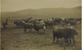 Western Expansion:Cowboy, Imperial Size Photograph of Cattle with Cowboys in Fenced areaWeiser, Idaho 1890s - ...
